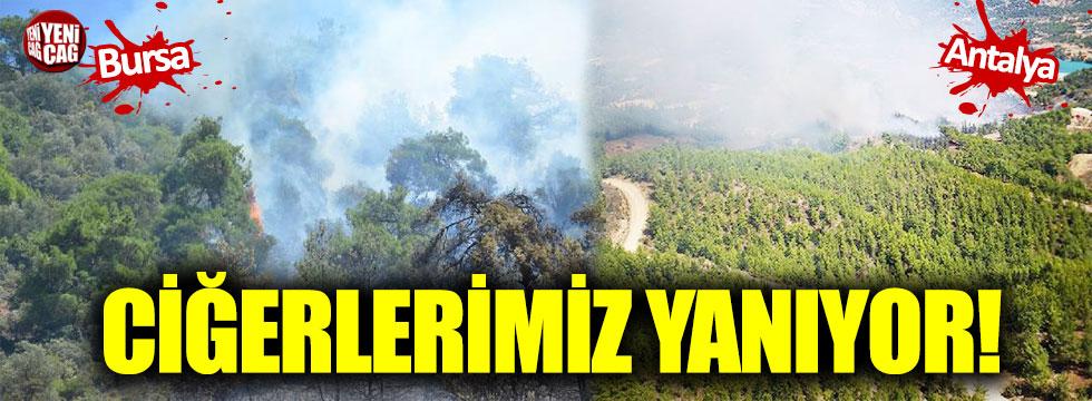 Bursa ve Antalya'da orman yangını