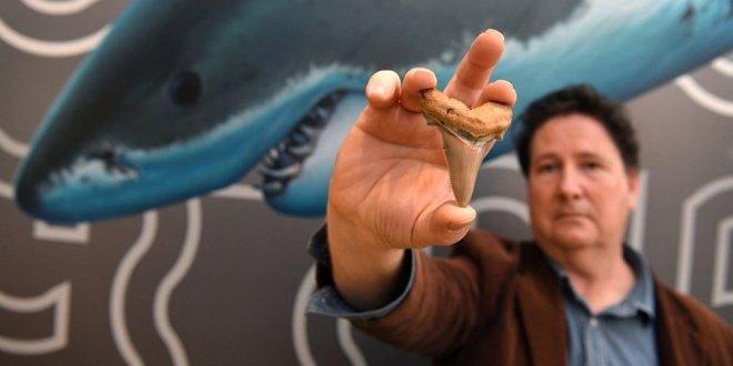 25 milyon yıllık dev köpek balığı dişi bulundu