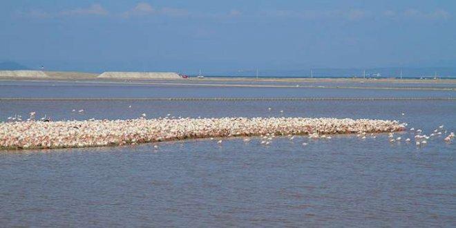 Flamingo göçü otoyol projesini durdurdu!