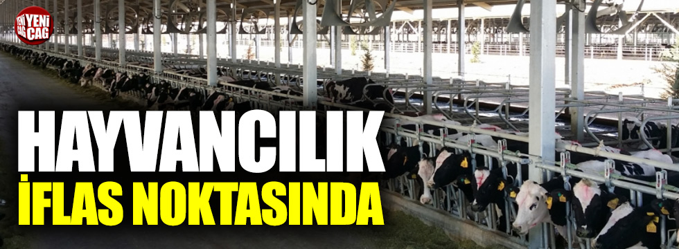 Türkiye'de hayvancılık iflas noktasında