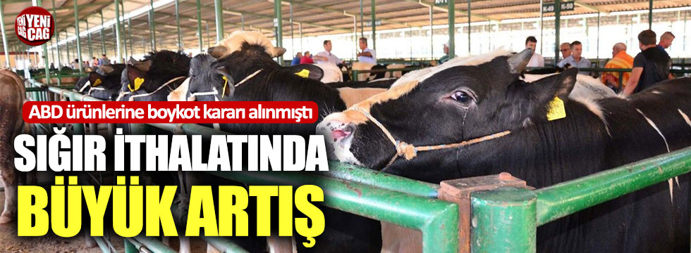 Sığır ithalatında büyük artış