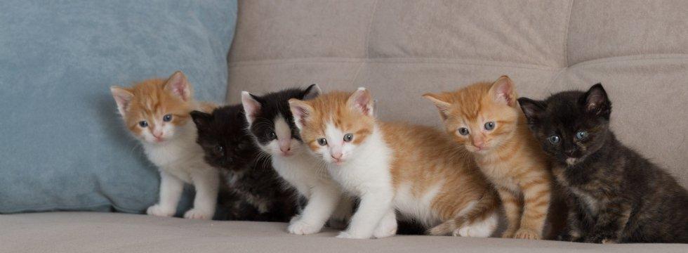 Kedi ve köpek yavrularının  satışı yasaklanıyor