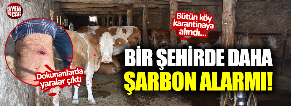 Sivas'ta şarbon paniği