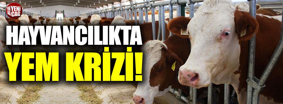 Hayvancılıkta yem krizi!