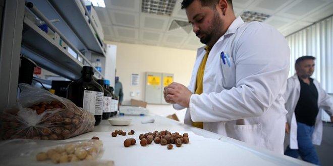 Fındık atıklarından kemoterapi ilacına etken madde