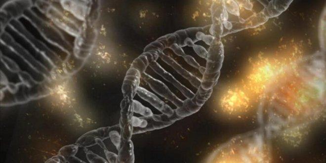 CRISPR ile DNA yerine RNA düzenlenebilecek