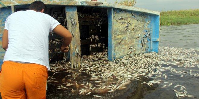Hatay'da binlerce balık karaya vurdu