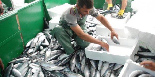 1 seferde 30 ton balık