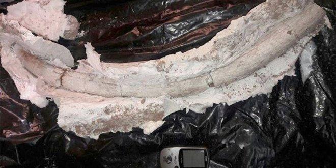 İran'da 20 milyon yıllık fildişi fosili bulundu