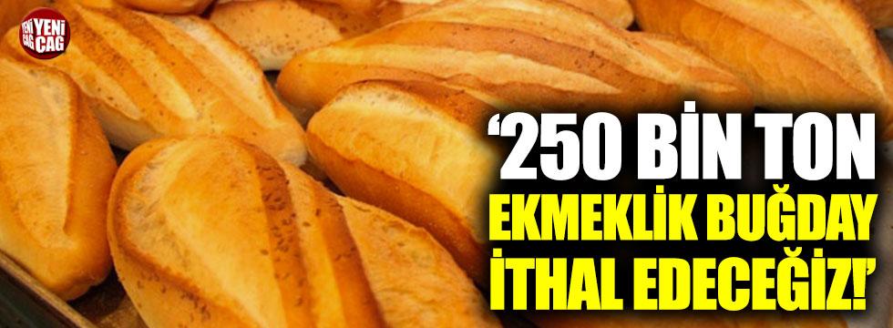 """""""250 bin ton ekmeklik buğday ithal edeceğiz"""""""