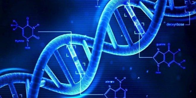 Japonya, insan embriyosunda genetik değişikliğe izin verecek