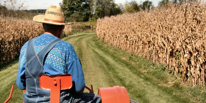 Tarım ÜFE Ekim'de yıllık yüzde 16.02 arttı