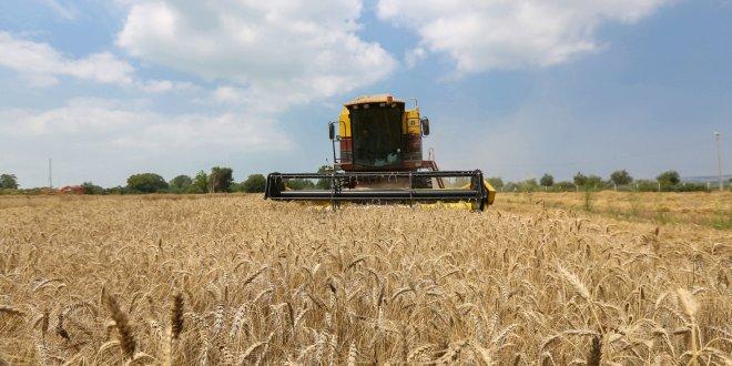 Buğday ekim alanı 17 yılda 25 milyon dekar azaldı