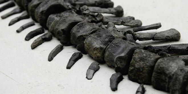 Bilinmeyen bir dinozor türüne ait kemikler bulundu