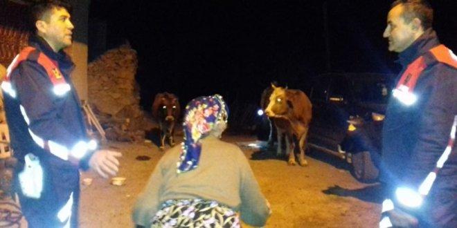 Kayıp inekler 10 kilometre uzakta bulundu