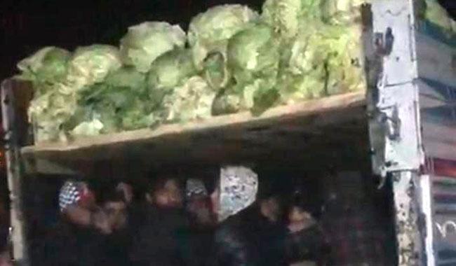 Lahanaların arasından 38 kaçak göçmen çıktı!