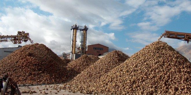 Şeker fabrikası siloları kapattı, şeker pancarı tarlada kaldı