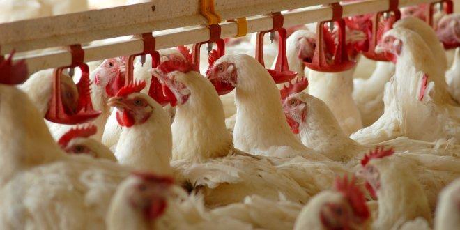 Beyaz et üreticileri de kepenk kapatıyor!