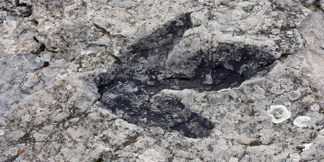 Dünyanın en küçük dinozor ayak izleri!