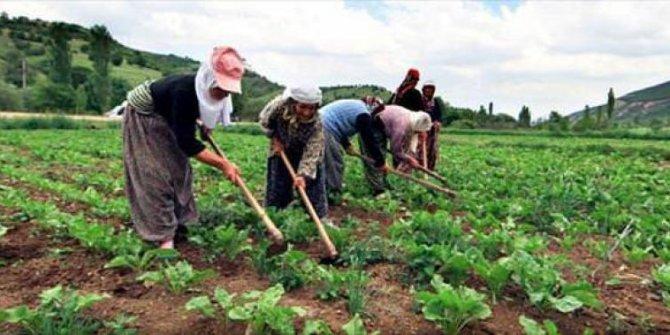 Besici ithalattan, çiftçi parasızlıktan muzdarip
