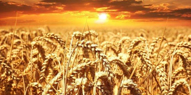 """Rusya: """"Türkiye'ye buğday sevkiyatı yüzde 40 arttı"""""""