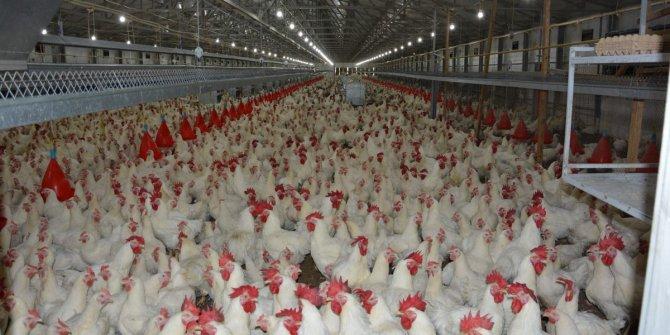 Rekabet Kurumu'ndan beyaz et üreticilerine ceza!