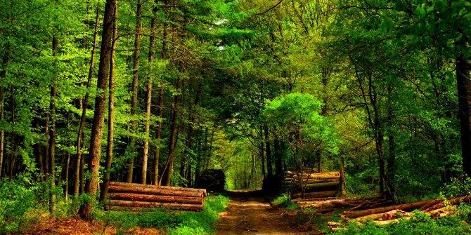 Bodrum ve Fethiye'deki orman arazileri kimlere satıldı