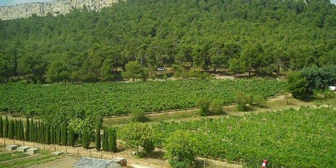 Atatürk Orman Çiftliği kiraya çıktı