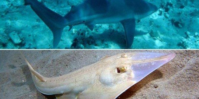 Akdeniz'de alarm: 20 tür tehlikede