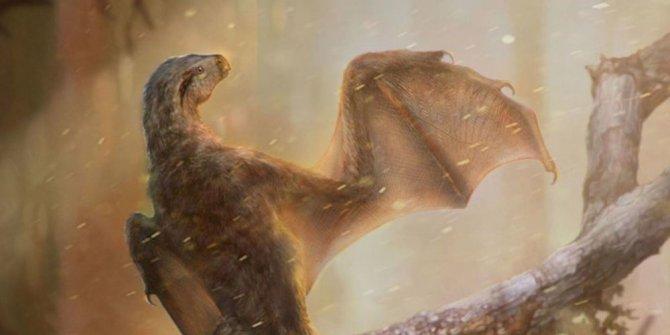 Çin'de yarasa kanatlı yeni bir dinozor türü bulundu
