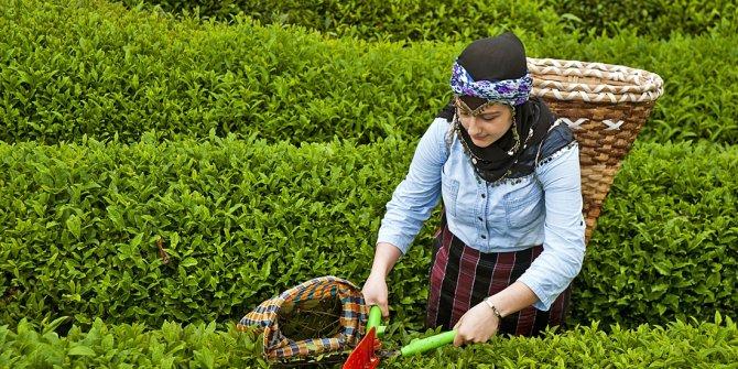 """Sarıbal: """"Ülke kaçak çay cennetine dönüşmüş"""""""