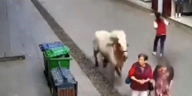 Hızını alamayan at, kalabalığın arasına daldı