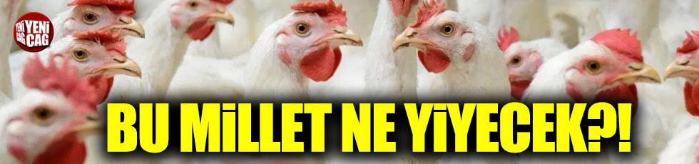 Tavuk fiyatları 3 ayda yüzde 50 arttı!