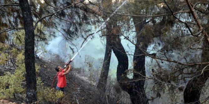 15 dekar orman arazisi kül oldu