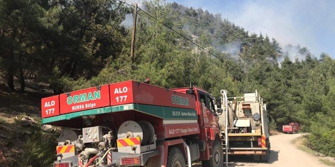 Muğla ve Bilecik'te orman yangını