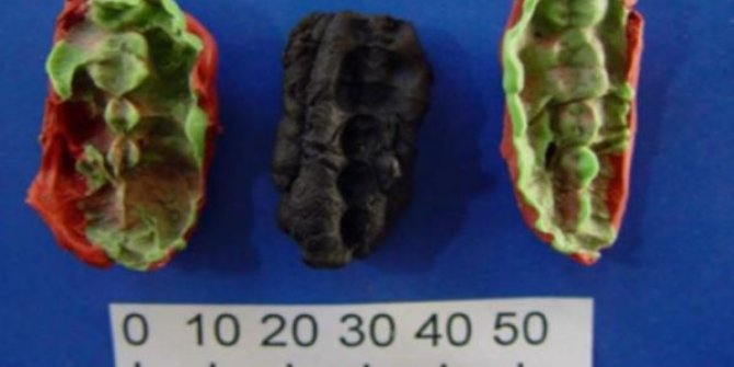 10.000 yıllık sakızdan DNA elde edildi