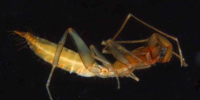 Avustralya'da 56 yeni hayvan türü bulundu