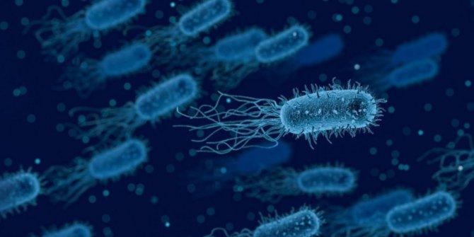İngiltere'de bakteri, 12 kişiyi öldürdü!