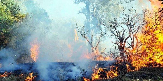 Ormanlar ranta mı kurban gidiyor?