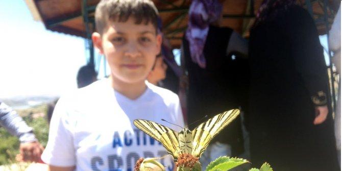 Türkiye'de çok az rastlanan o kelebek Sivas'ta görüldü