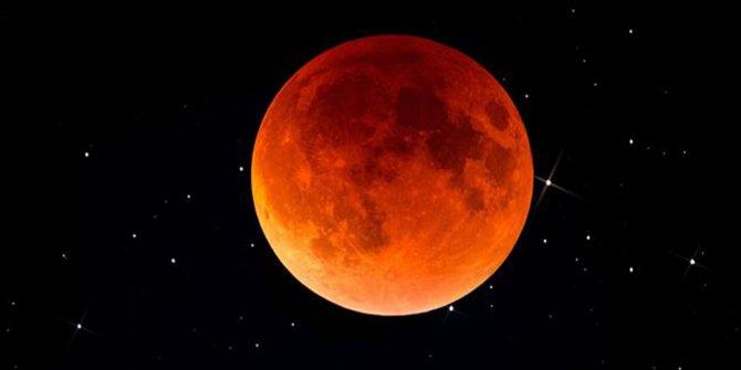 Hayvanlar, Güneş ve Ay tutulmalarında neden garip davranıyor?