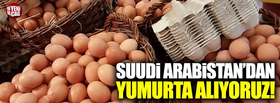 Suudi Arabistan'dan yumurta alıyoruz!