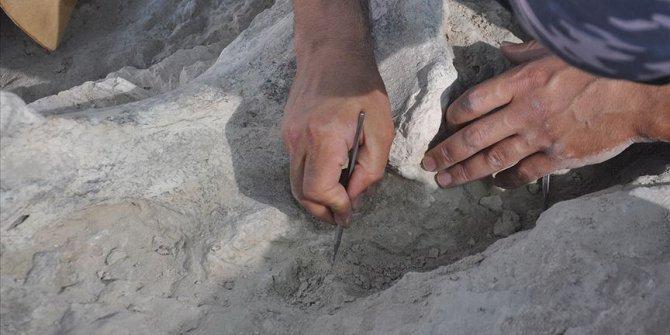 Milyonlarca yıllık fosiller gün yüzüne çıkıyor