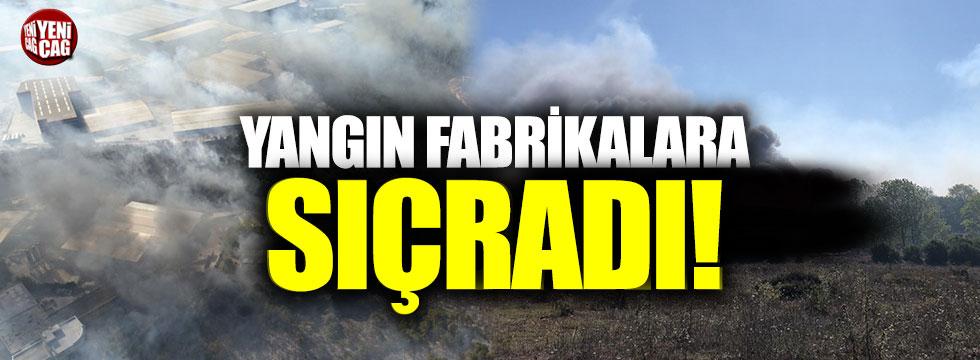 Gebze'de orman yangını fabrikalara sıçradı