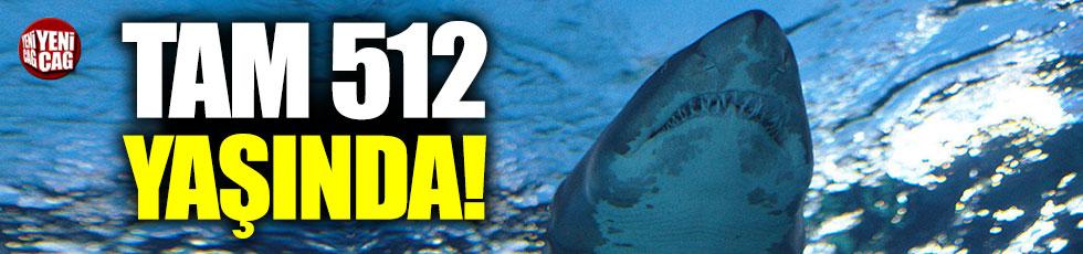 514 yaşında köpekbalığı tespit edildi