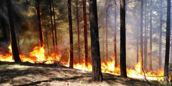 Uçaklar neden yangına müdahale için çağırılmıyor?