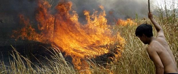 Amazon ormanlarında bu yıl 72 bin yangın çıktı