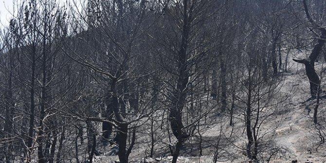Karabağlar'daki yangından geriye kapkara bir tablo kaldı