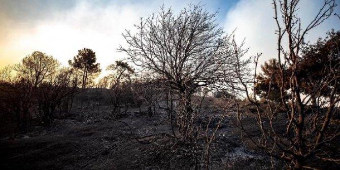 53 saatlik yangında 3 bin 500 hektar kül oldu!