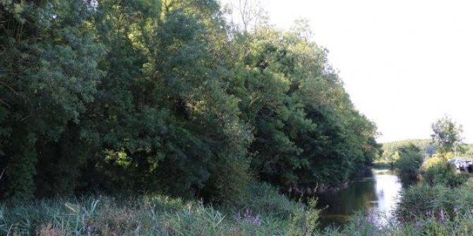 Sadece bilim insanlarının girebildiği orman, projeyle gezilecek
